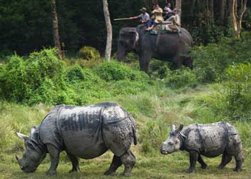 Elephant-safari-in-chitwan-national-park