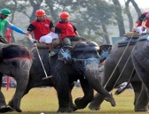 Elephant Polo in Nepal